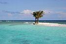 Three Palm Island by DARRIN ALDRIDGE
