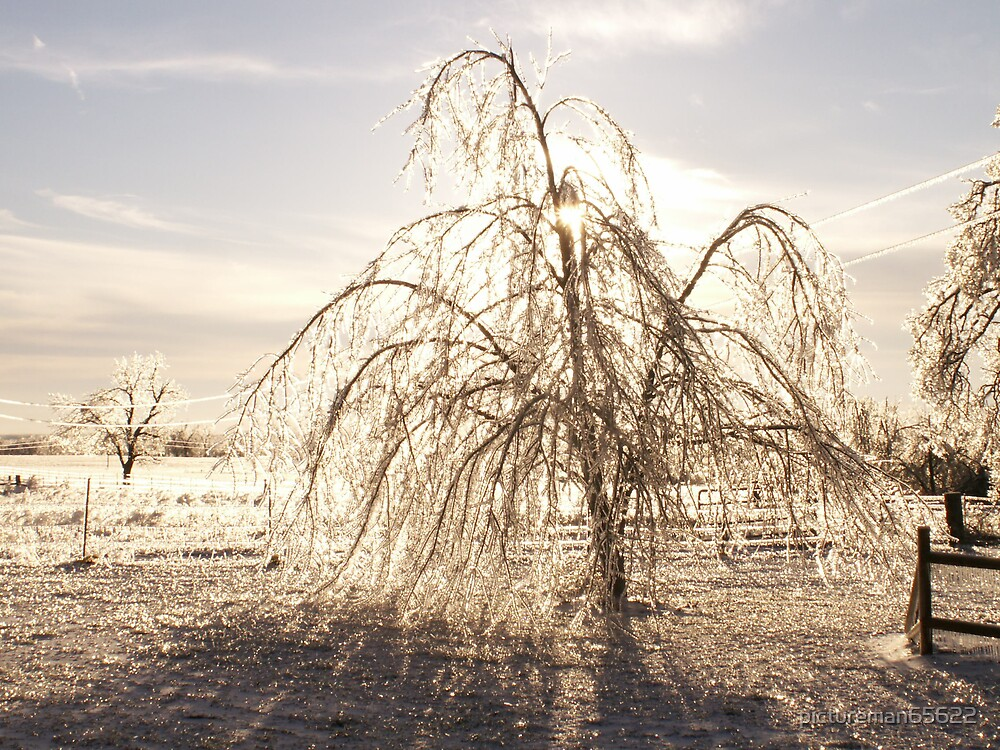 ice storm 2007 6 by pictureman65622