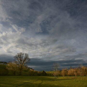 Field of Dreams by lawrencew