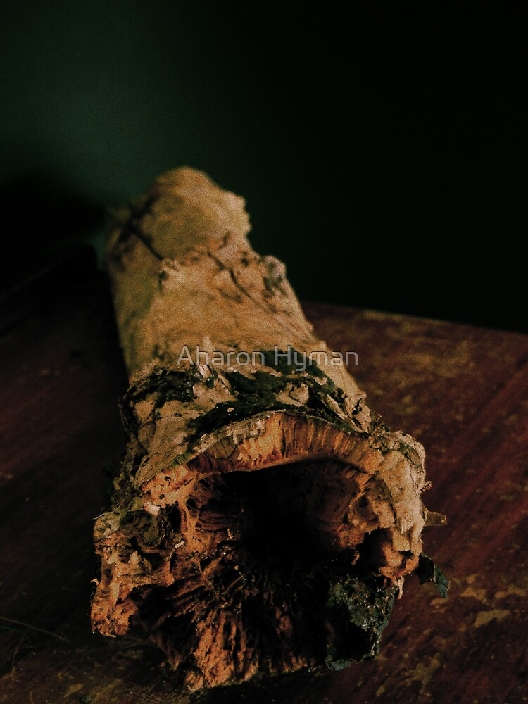 log by Allan Hyman