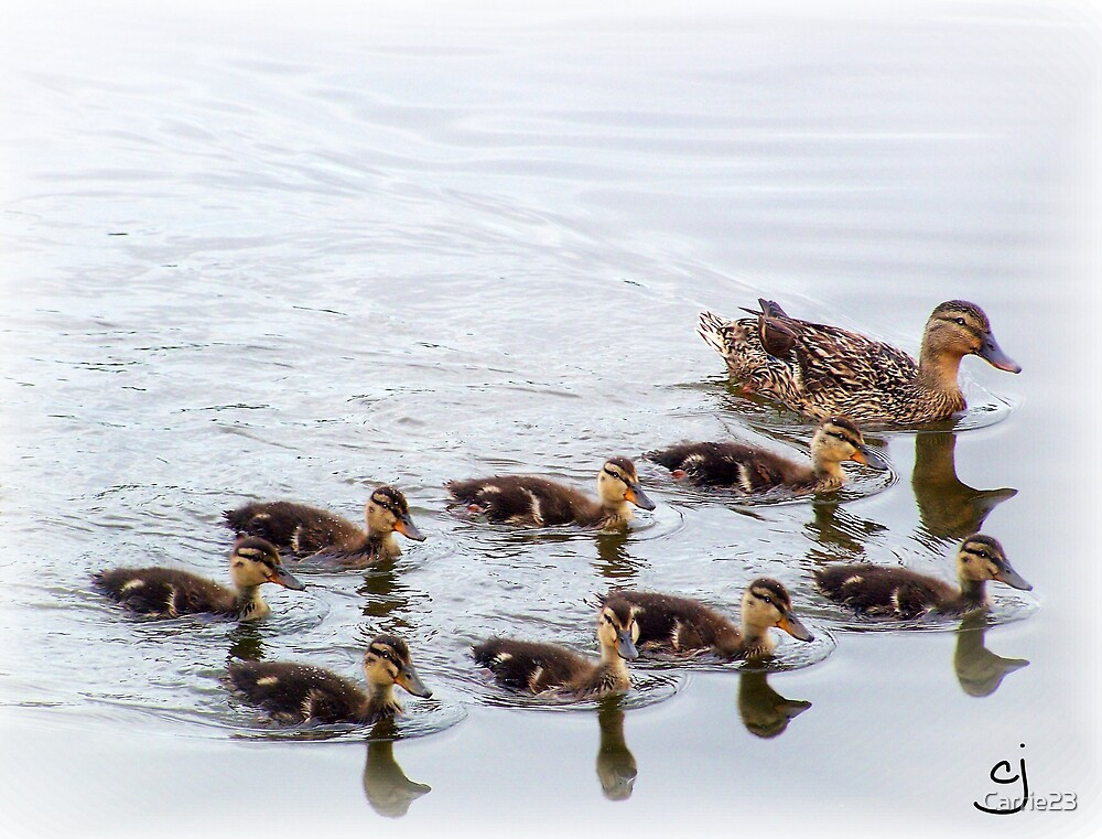 The Mother Duck by Carrie23