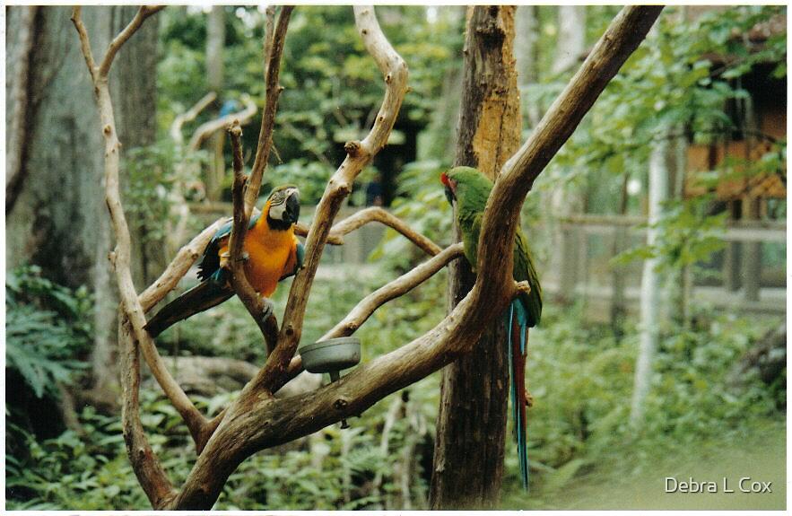 Beautiful Birds  by Debra L Cox
