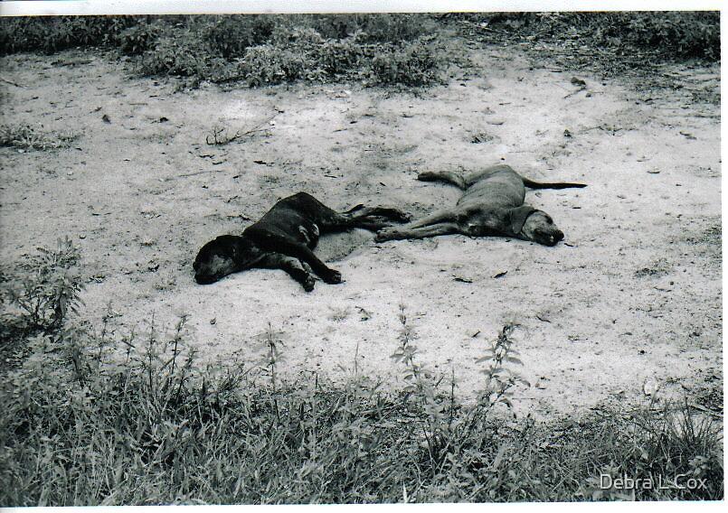 Lazy Olde Dogs by Debra L Cox