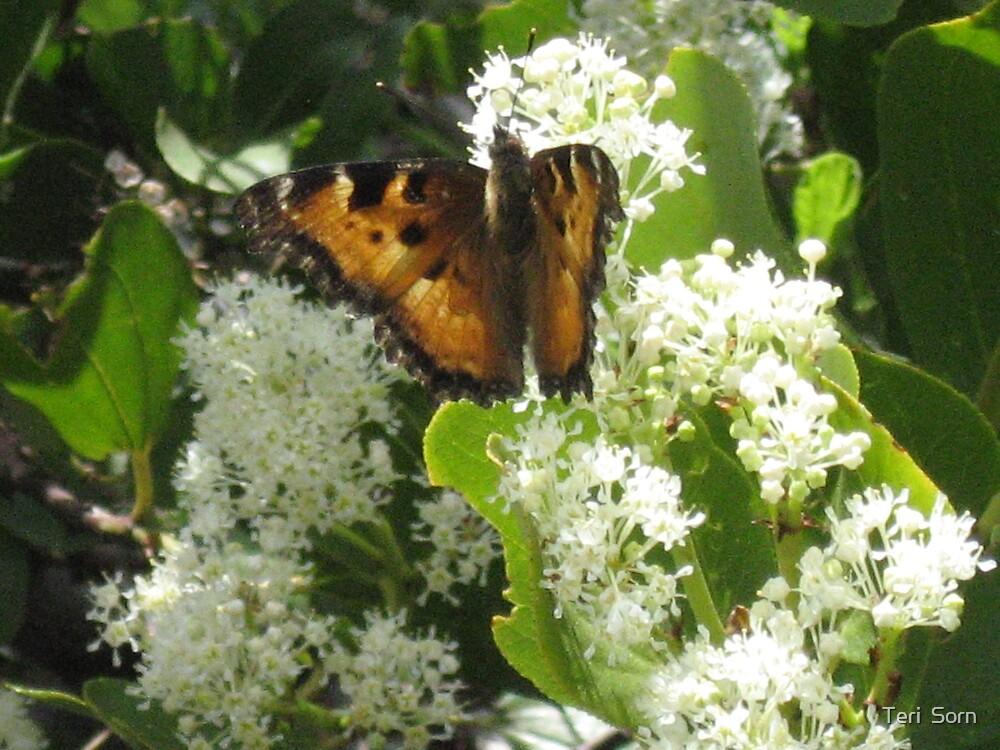 Butterfly Bush by Teri  Sorn