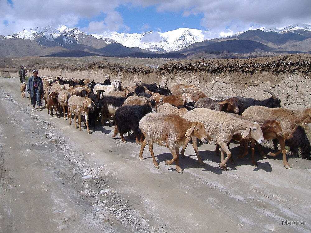 Herding goats in Shomali Valley, Afghanistan by Marsha