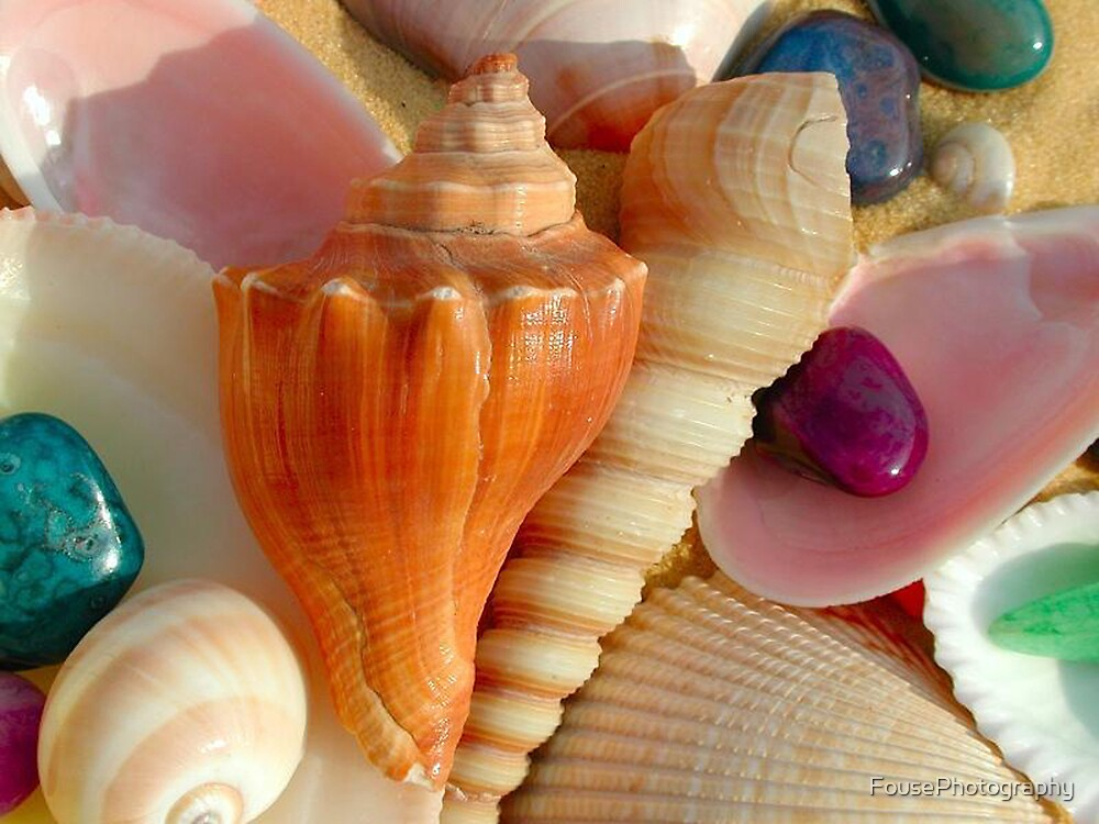 Treasures from the Sea by FousePhotography