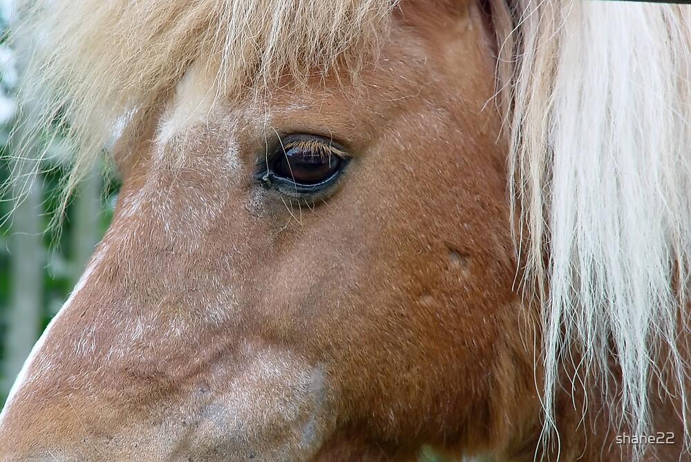Pony by shane22