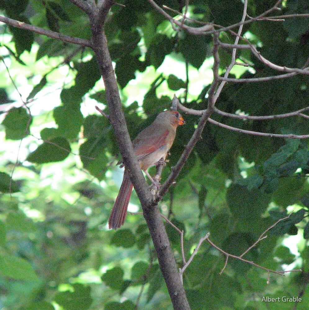 A Cardinal's Interest by Albert Grable