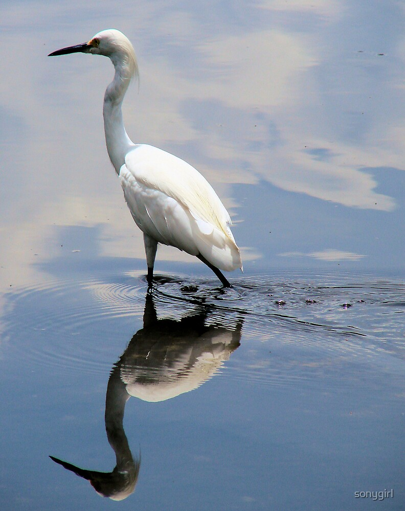 little egret by sonygirl