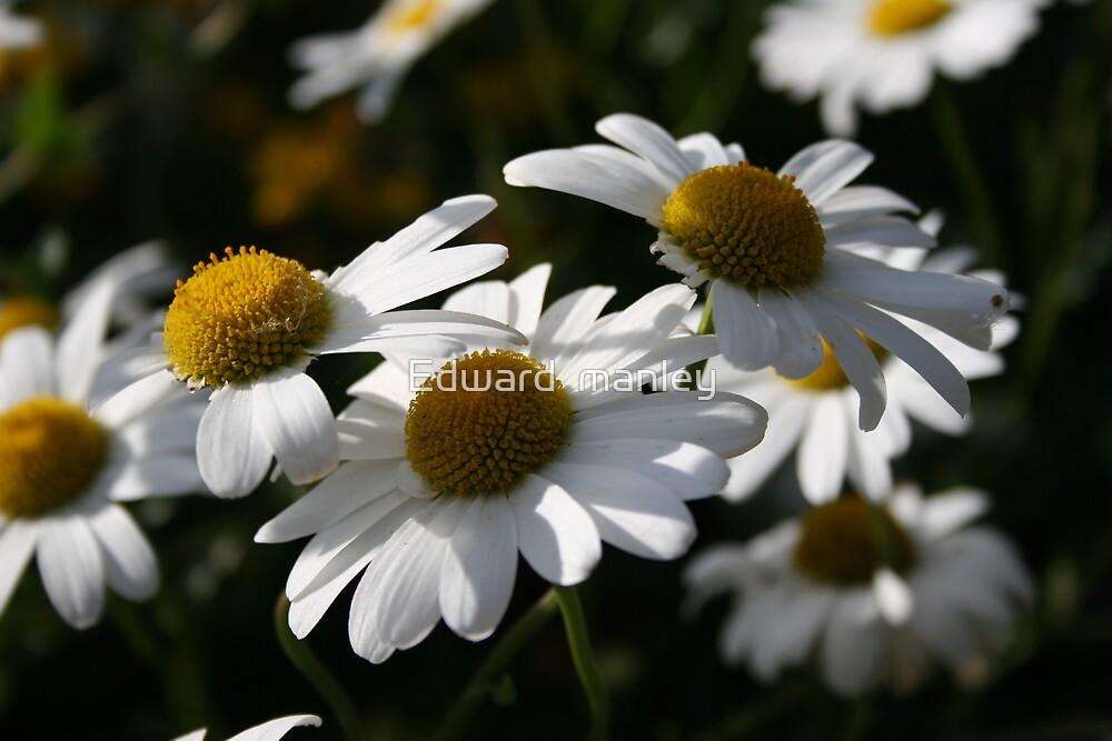daisy chain by Edward  manley