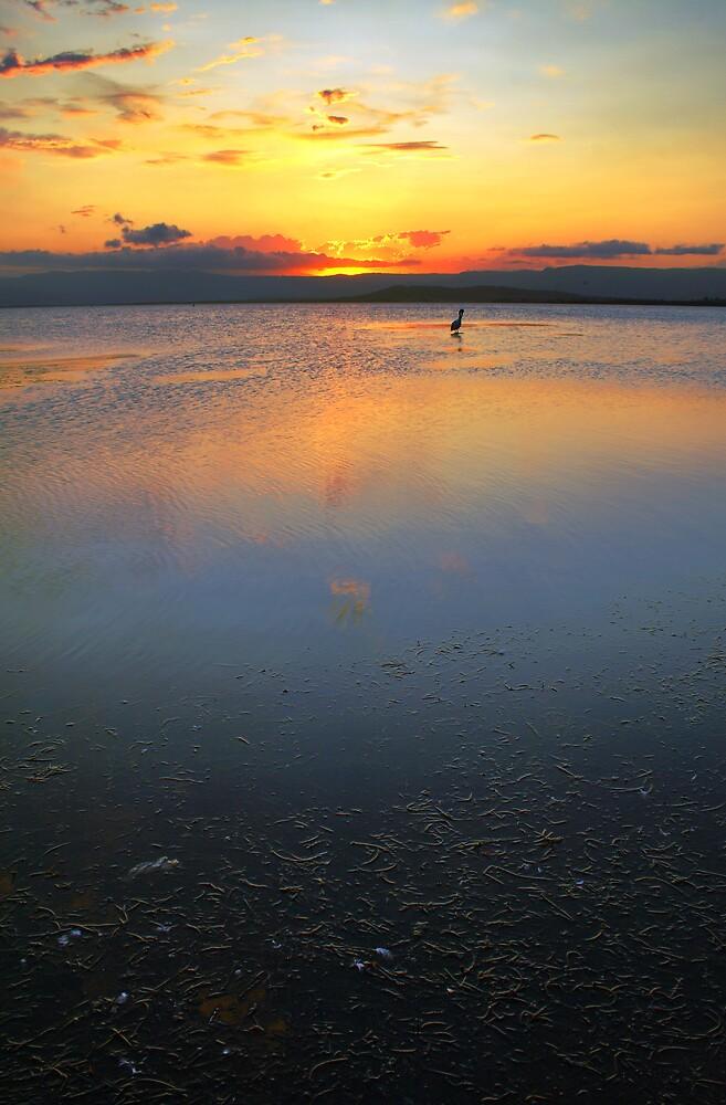 Lake Illawarra, NSW, Australia by David Haviland