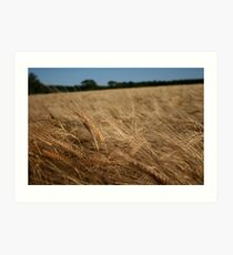 harvest is ripe labours are few. Art Print