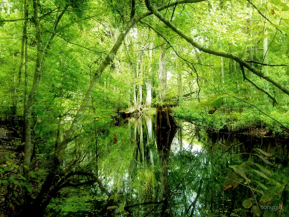 fern gully by sonygirl