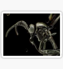 Gold-coated fungus gnat under light microscope Sticker