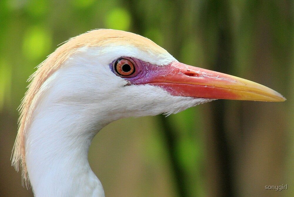heron face by sonygirl