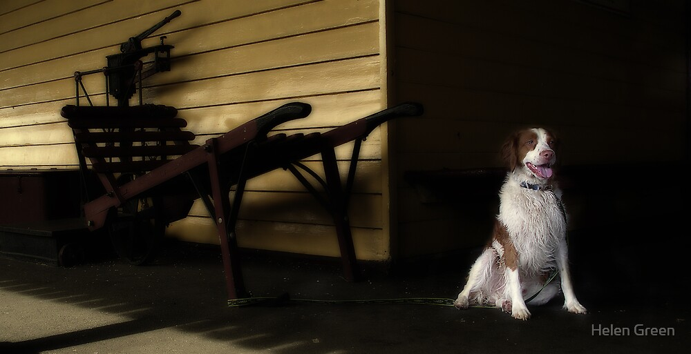Waiting In The Shadows by Helen Green