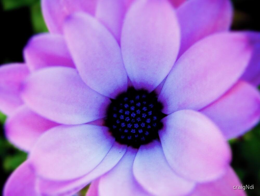 Purple Flower by craigNdi