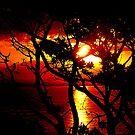 Australian Sunset by P'fessor  Guus