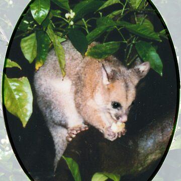 I spy a Possum by Rayjun