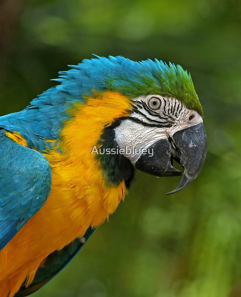 Blue & Gold Macaw. by Aussiebluey