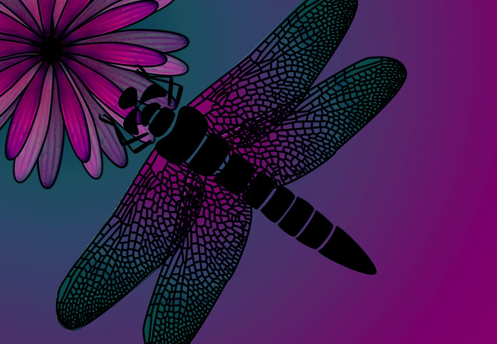 dragonfly on pink daisy by Carolyn