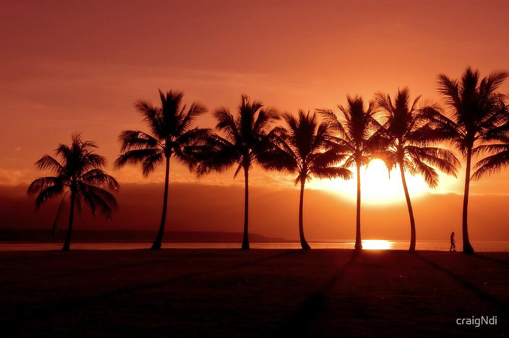 Palm Sunset by craigNdi