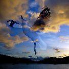Gull Sunset by craigNdi