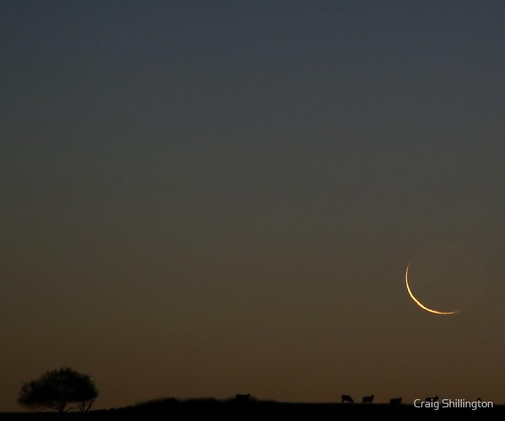 Sheep Crescent by Craig Shillington