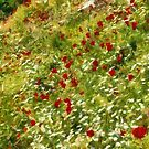 Impressionist Poppies by taiche