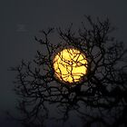 """ Yellow Moon Winter "" by Richard Couchman"