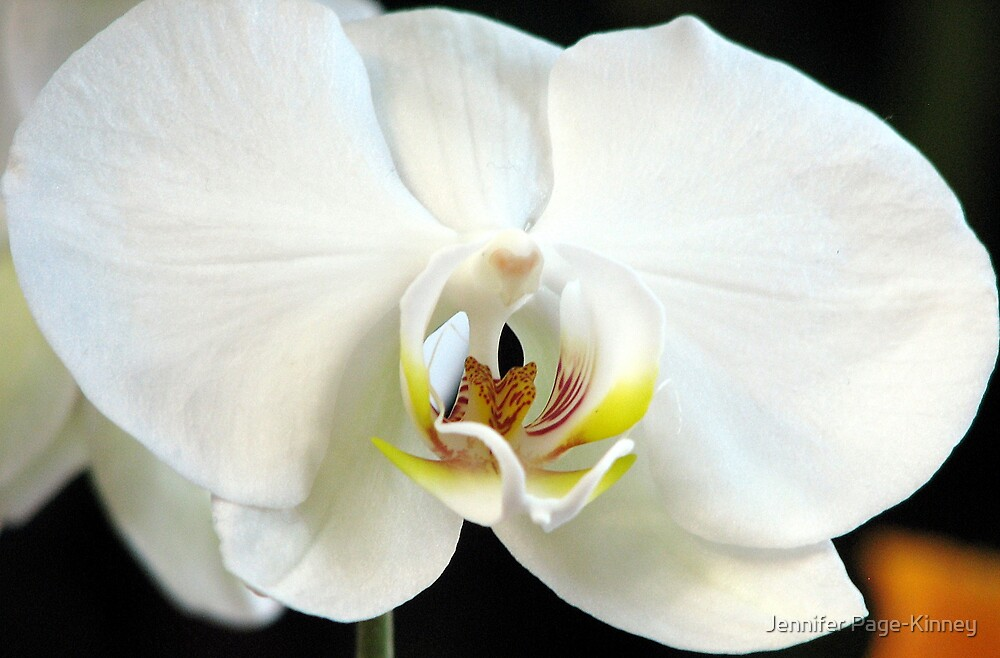 White Orchid by Jennifer Page-Kinney