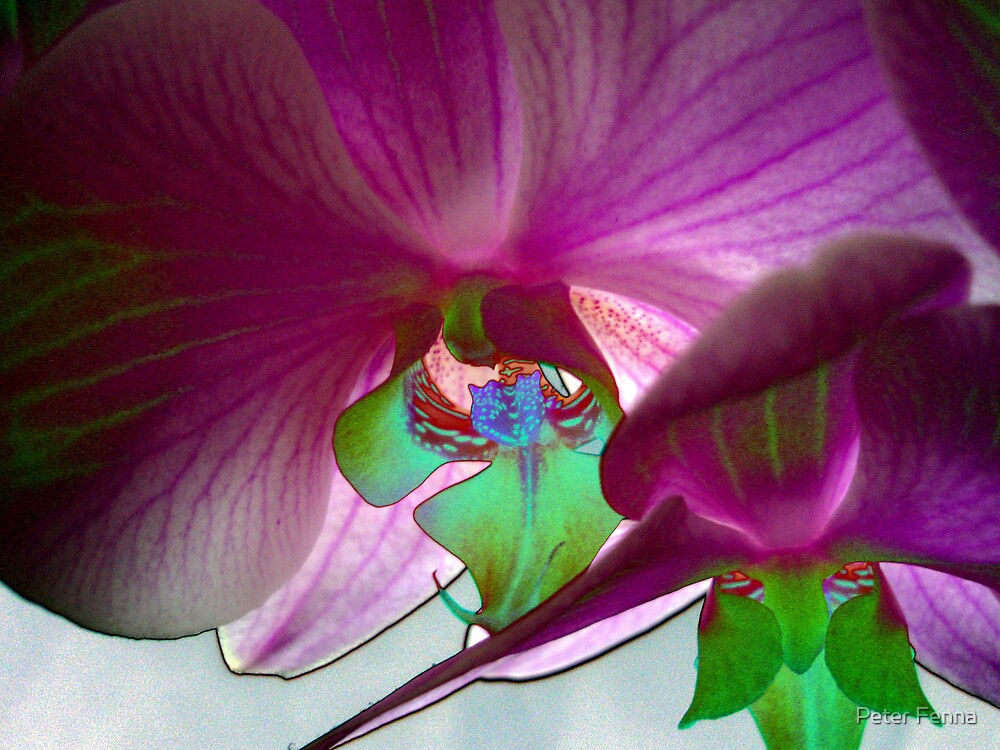 Orchid Hues by Peter Fenna