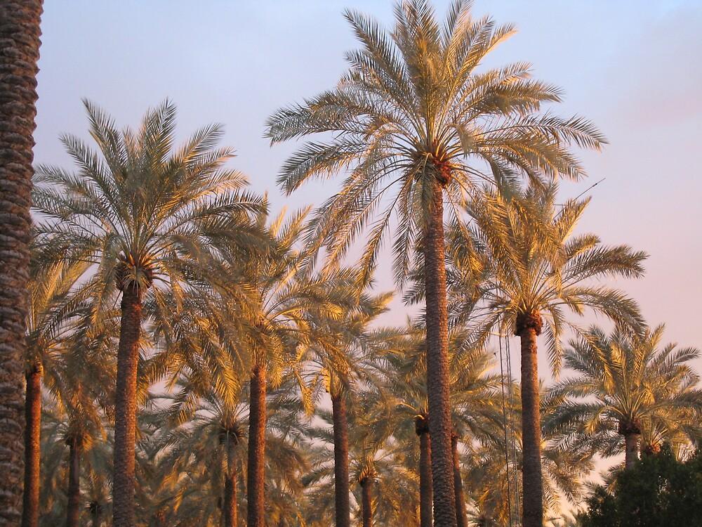 Palm trees by Samantha Lowe