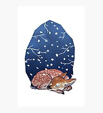 Sleeping Fawn Photographic Print