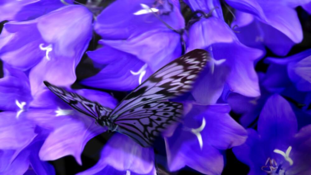 Purple by Cliff Vestergaard