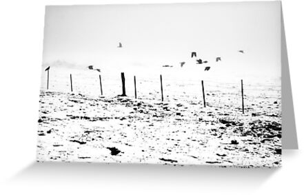 The Birds by Jonathan Russell