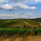 Tuscan veynards by Julien Tordjman