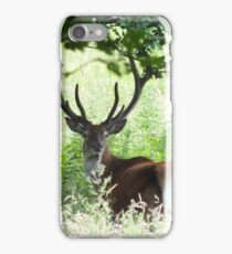 The Young Pretender - Red Deer Stag iPhone Case/Skin