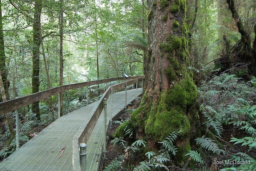 Forest walk by Joel McDonald