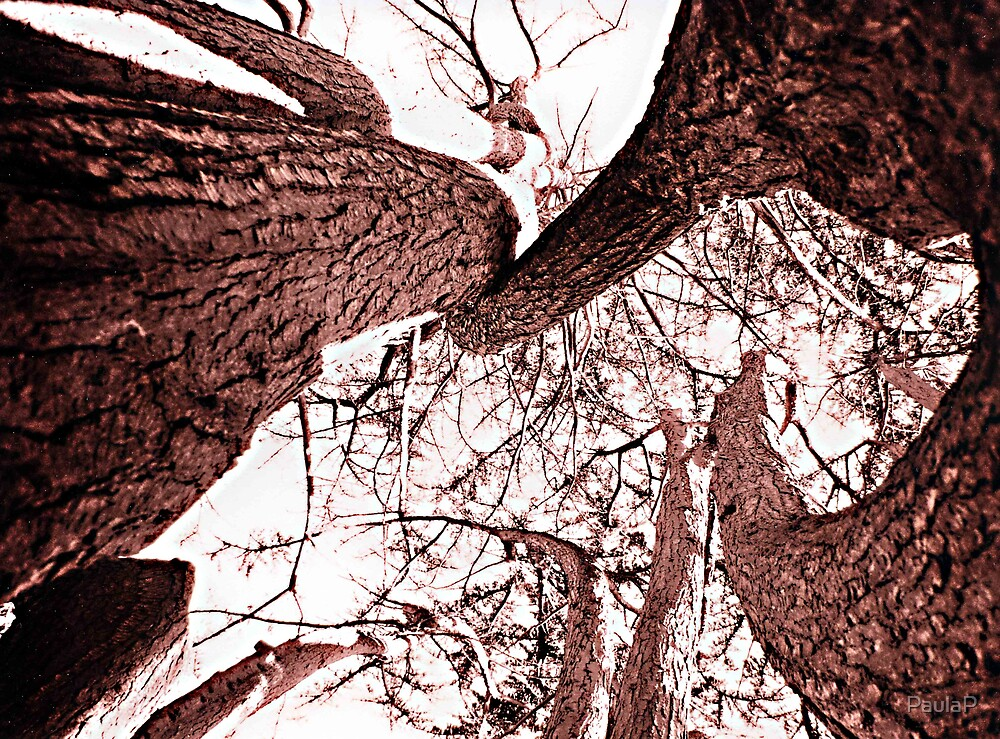 Twisted Tree by PaulaP