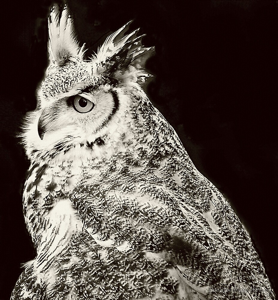 Great Horned Owl by Jennifer Page-Kinney