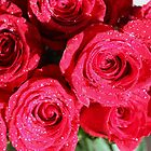Red roses by agnessa38