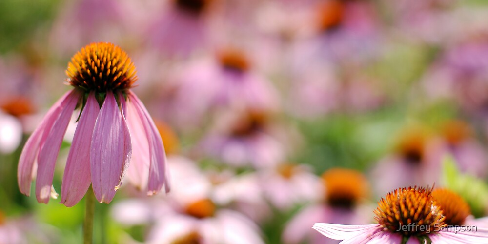 Pink and brown by Jeffrey Sampson