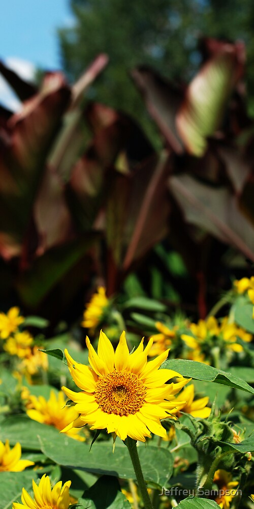 Yellow and Brown by Jeffrey Sampson