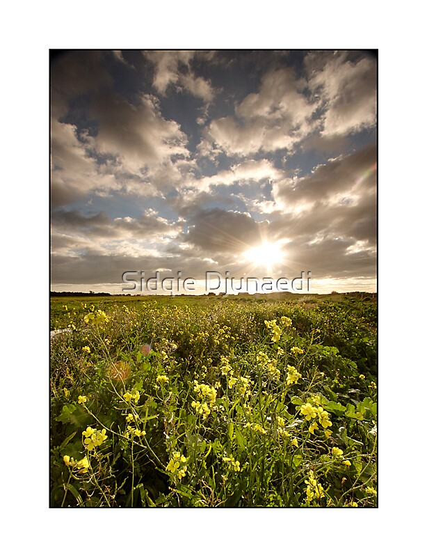Fields Of Gold by Sidqie Djunaedi