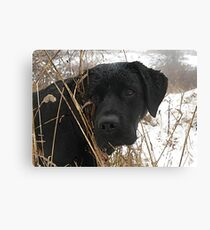 Late Season Hunt - Black Labrador Canvas Print
