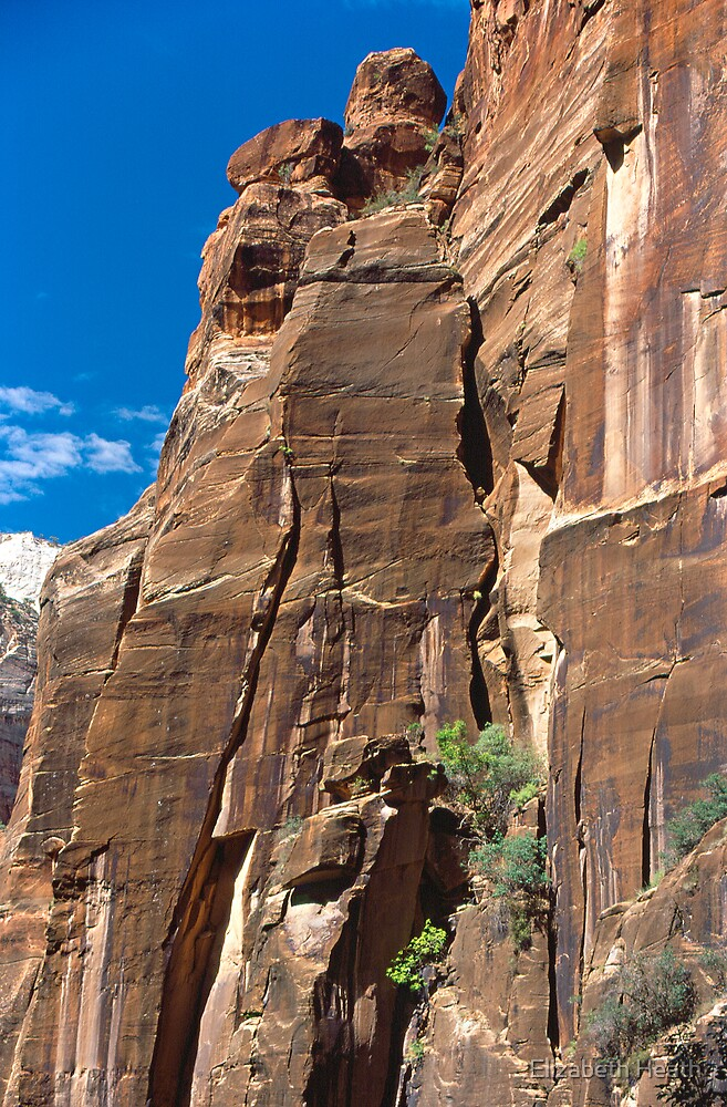 Zion National Park by Elizabeth Heath