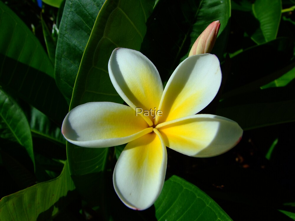 Flower 3 by Patje
