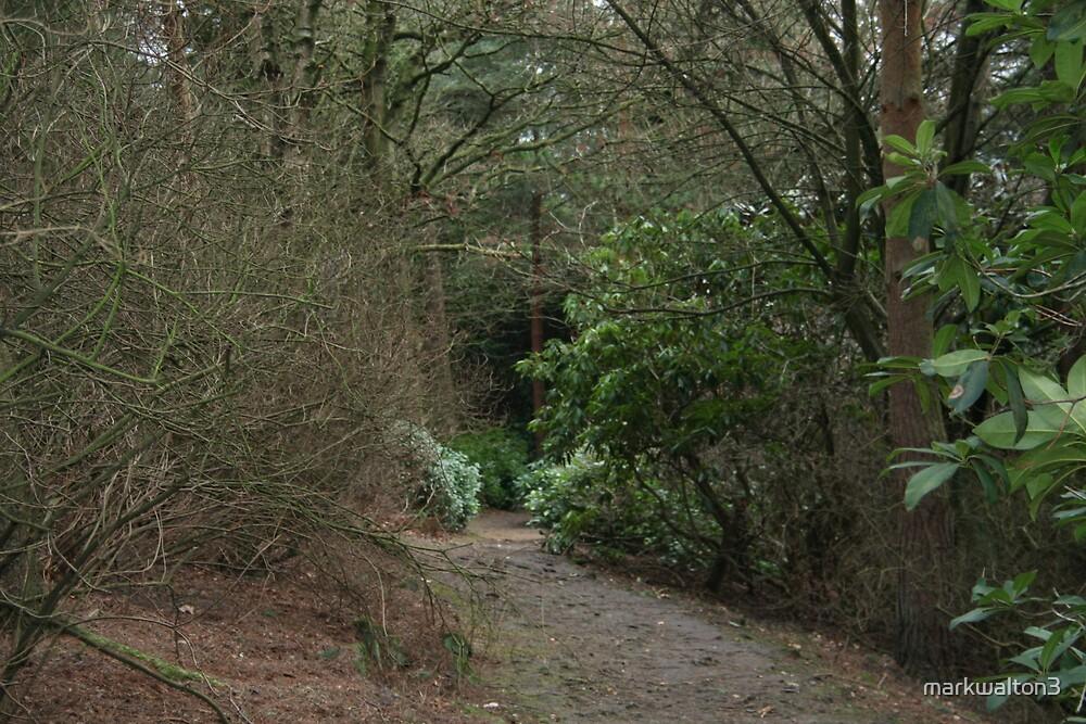 Countryside Walk by markwalton3