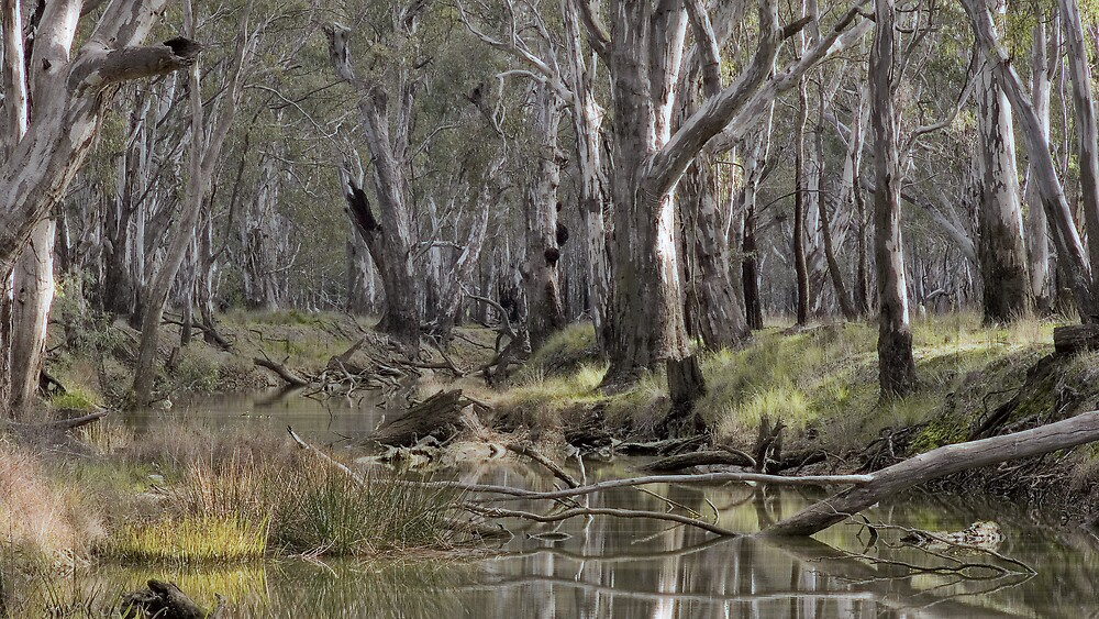 On the Murray floodplain by eclectic1